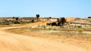 Binns Track (NT)