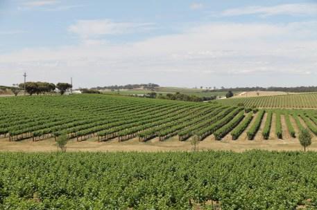 Clare Valley Vineyards (SA)
