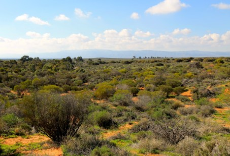 Port Augusta - Australian Arid Lands Botanical Gardens (SA)