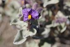 Canna To Wandina Station - Exploring Wildlife Country (WA)