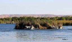 Lake Kununurra - Moving A Reed Island At Kimberleyland Caravan Park (WA)