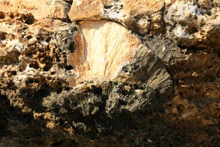 Cape Range National Park - Osprey Bay Fossilised Coral and Shells (WA)