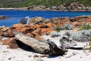 Peaceful Bay - Whale Bones (WA)