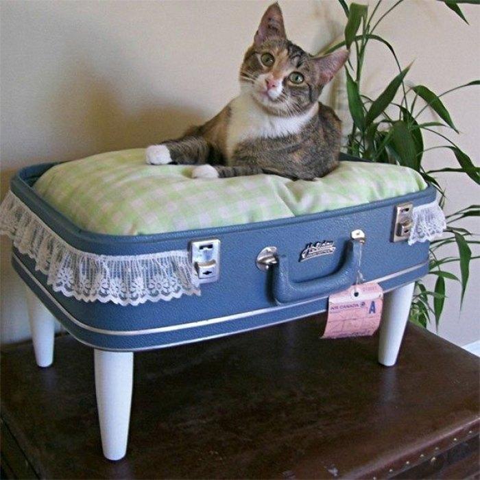 Manfaatkan Koper lamamu menjadi tempat Tidur Kucing