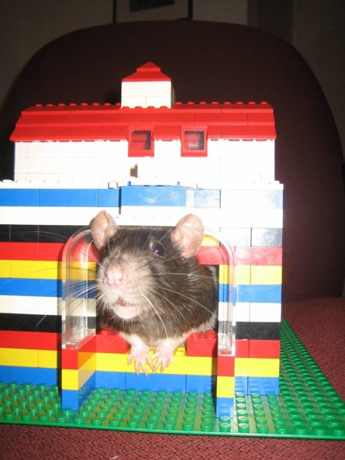 Lego untuk Rumah binatang peliharaan