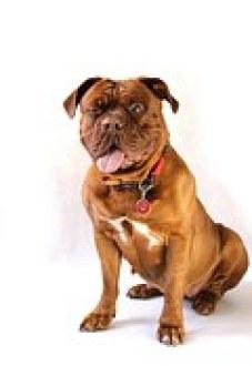 dog-794781__180