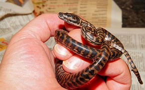 snake-1531298__180