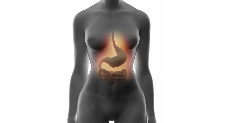 Digestive stomach system