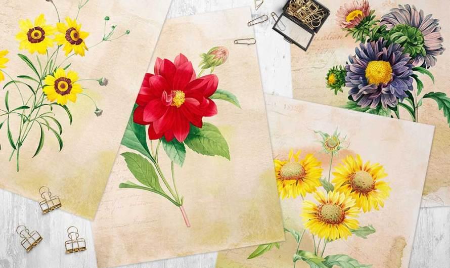 Vintage Flowers on 4 Free Printable Wall Art Designs