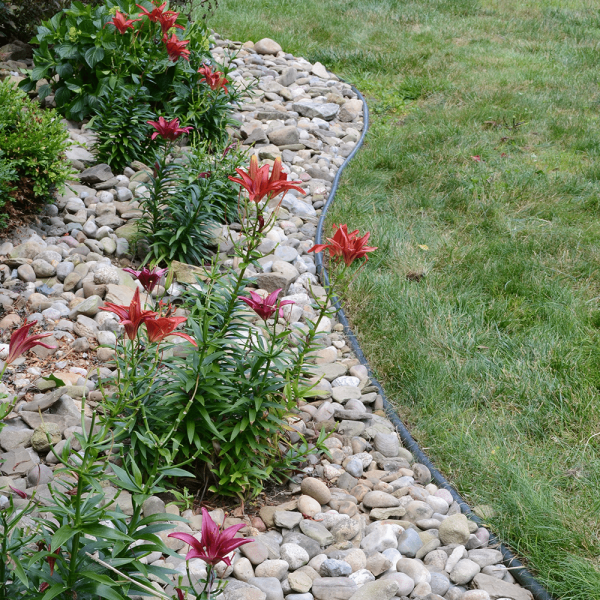 Professional Landscaping - Dimex
