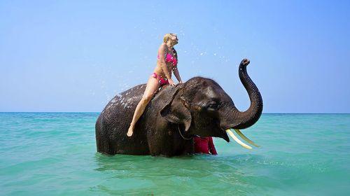 泰國象島少有的體驗【海灘戲水】【叢林騎象】【大象表演】線路推薦【攜程玩樂】