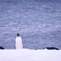 Boos Kitchen Islands Outdoor Supplies 从复活节岛开始一路去南极 圣地亚哥游记攻略 携程攻略