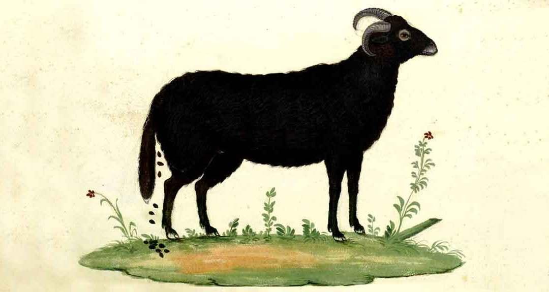 Keumaya – Black Goat Daughter [NSFW]