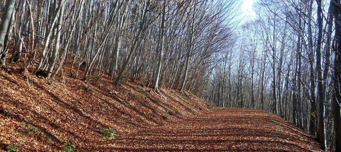Dia 2, Selva de Irati