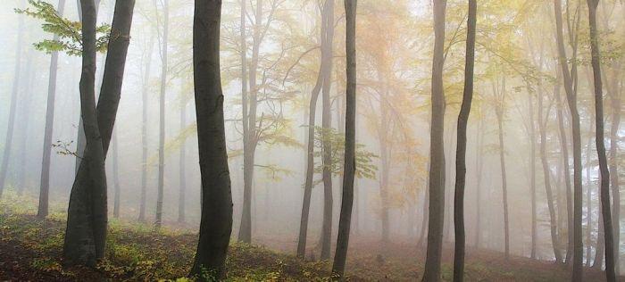 pirineo navarro otoño