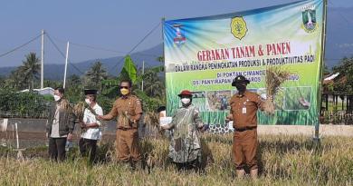 Musim Tanam Padi Ketiga, Pemprov Banten Target 37 Ribu Hektar