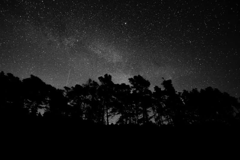 foto keren untuk profil whatsapp instagram telegram tiktok facebook line siluet pepohonan hitam putih monochrome malam hari