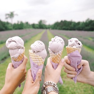 Lavender ice cream which was to die for at Terre Bleu
