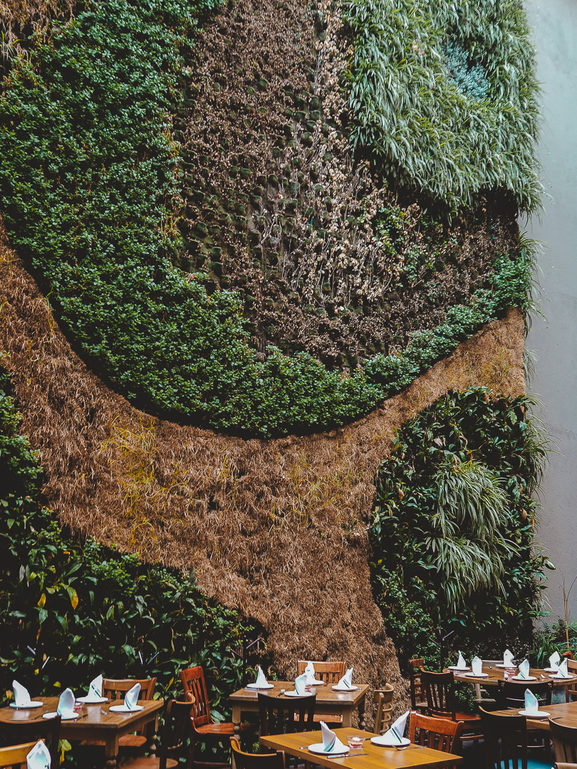 Living wall at Puntarena in Mexico City