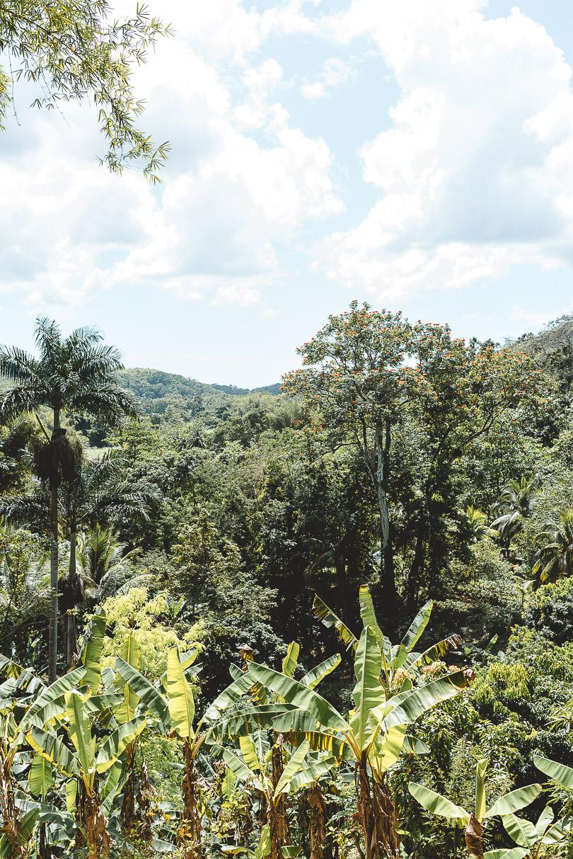 The view at Zimbali Retreat