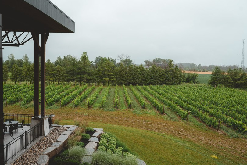 Dark Horse Winery