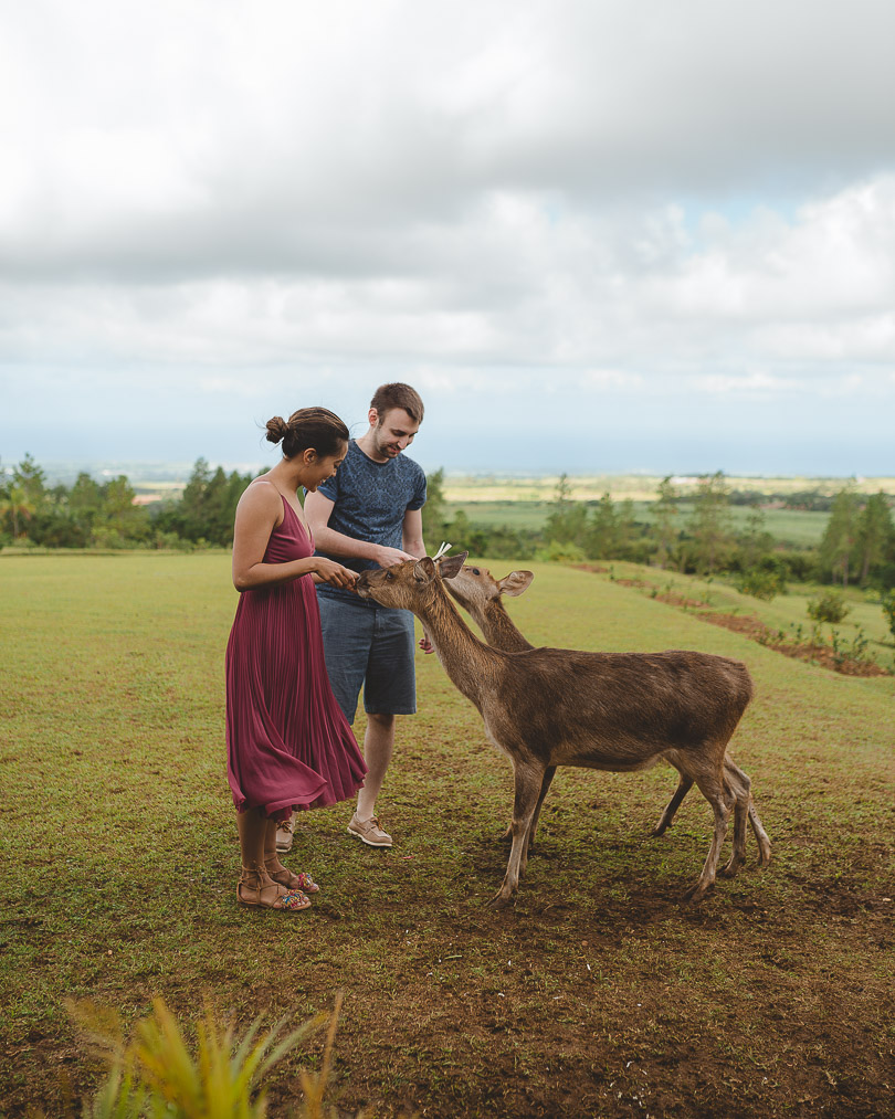 Feeding the deer at Bois Cheri tea plantation