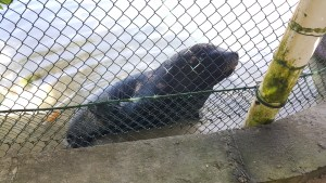 You could pay extra to interact with sea lions