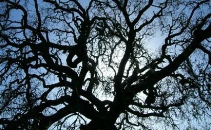 800-Year-Old Oak Tree Stops Traffic in Turkey