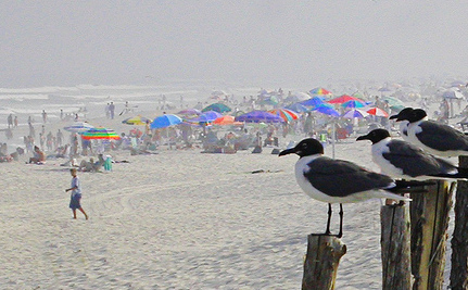 """EPA: It's """"Acceptable"""" For 1 in 28 To Get Sick From the Beach"""