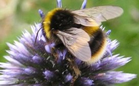 Research Firm Blames Monsanto for Bee Deaths So…Monsanto Buys It