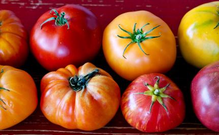 Slikovni rezultat za tomato winter