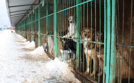 Will Russia Legalize Concentration Camps for Stray Cats and Dogs?