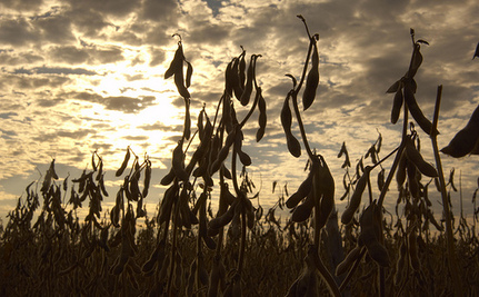 Genetically Modified Crops are Poisoning Us – On Purpose