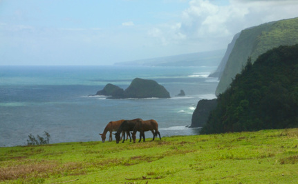 The Big Island Tells Biotech Companies: We Don't Want Your GMOs