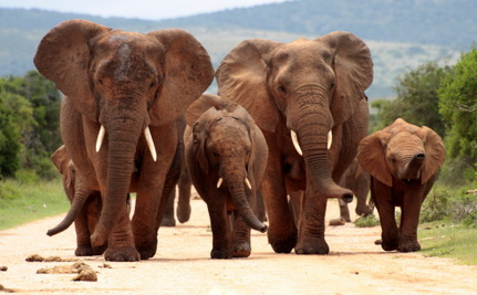 Celebrate World Elephant Day With 5 Great Organizations Working to Save Them