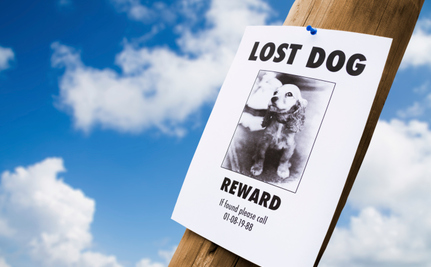 In the 21st Century, You Should Always Be Able to Find Your Lost Dog