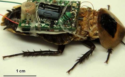 Do You Support Using Insects as Military Weapons?