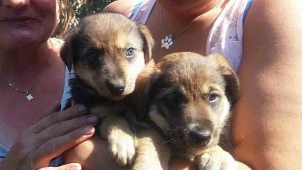 pups closer