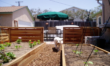 Garden Ideas For Dogs Inspiration Interior Designs