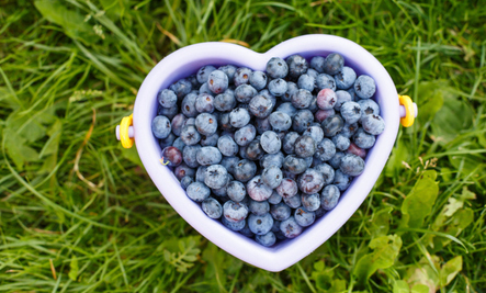 The Impressive Anti-Cancer Power of Berries