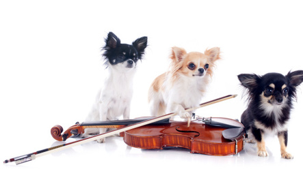 Symphony Hires Professional Dog Musicians