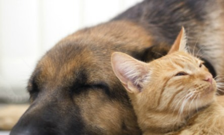 5 Secrets to a Happier Pet