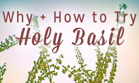 3 Reasons to Try Holy Basil