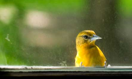 Image result for Birds in window