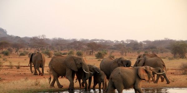 GOP: Don't Remove Restrictions on Ivory Imports!