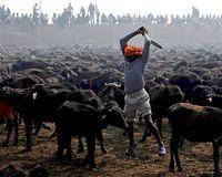 Stop the Gadhimai Massacre 2014