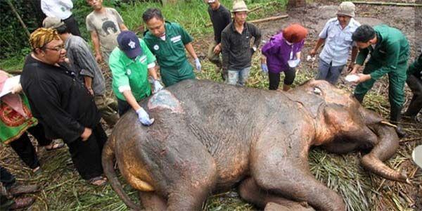 Yani the Elephant Cried as She Died - SHUT DOWN this Horrific Zoo