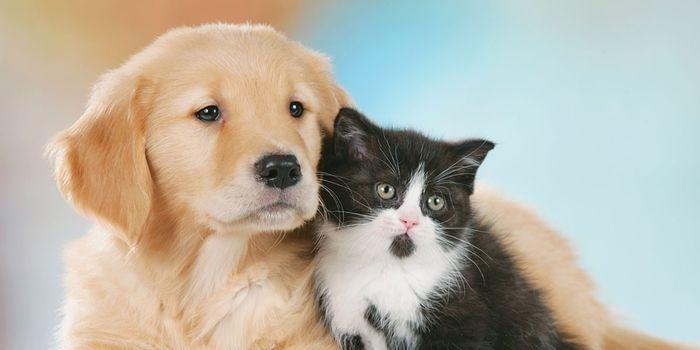 Risultati immagini per basta violenza sugli animali