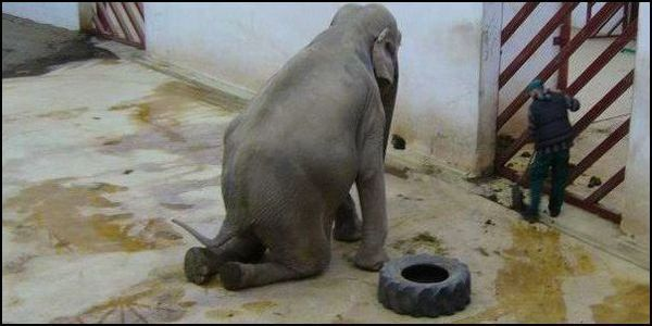 Romania- Send Tania, the Zoo Elephant, to a Sanctuary