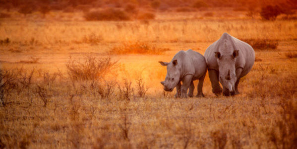 Namibia: Don't De-Horn Rhinos for Profit!